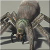 View Details on Giant Spiders